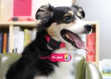 قلاده ای که صدای سگ را ترجمه می کند